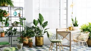 spring-botanicals-indoor-plants-greenery-expert-tips-Healthy-home-tips-and-tricks
