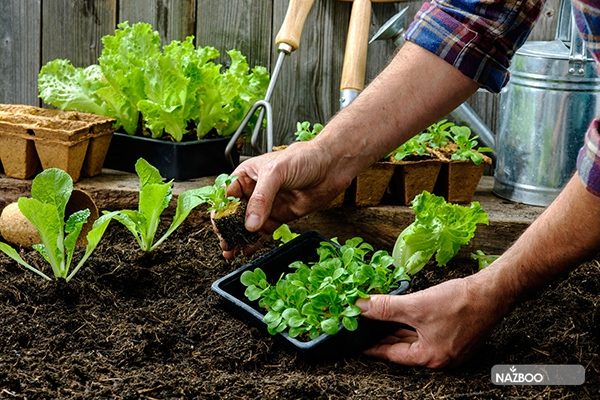 what-is-vegetable-gardening